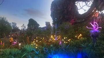 Photos - John and Leslye at Pandora - The World of Avatar!