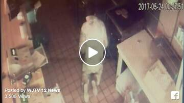Todd Berry - MUST SEE: TheHAMBURGLARis on the loose in Jackson