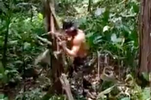 WATCH: This Maniac Punch Down a Tree
