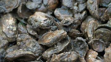 Local News - Oyster Theft Causes Setback In Sandwich