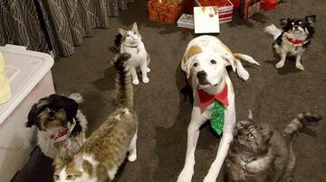 Pet Planet - Winter Pet Tips - Healthy And Happy Pets This Holiday!