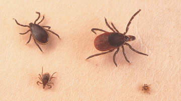 """Chris & Rosie - House Orders The Pentagon To Reveal Whether They """"Weaponized"""" Ticks"""