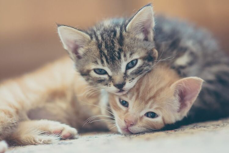 Here's Some Kittens!