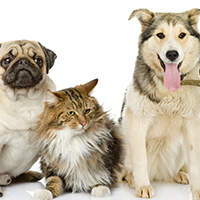 Pet Of The Week - See this week's available animal!