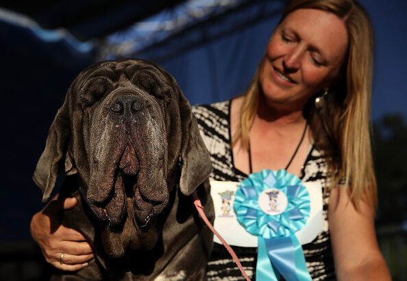 The Sonoma Marin Fair Hosts Annual Ugliest Dog Competition; Getty Images