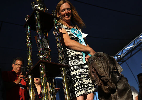 The Sonoma Marin Fair Hosts Annual Ugliest Dog Competition