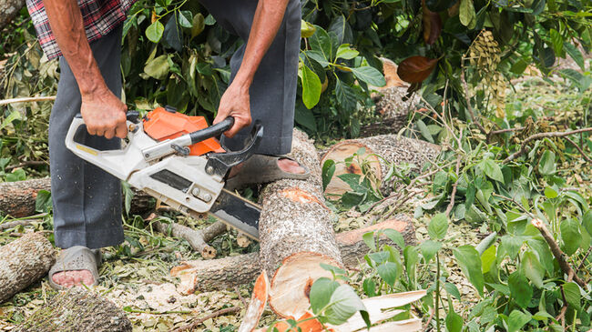 Sawing the wood