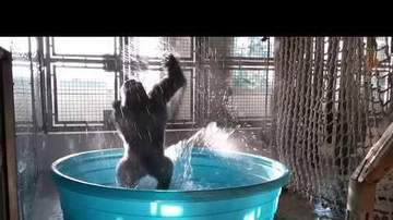 Chris Carmichael - WATCH: Gorilla Breakdancing Will Make You Smile
