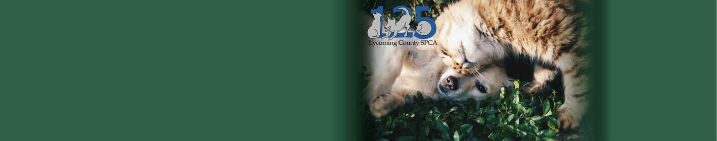 Meet your new furry friend with our Lycoming County SPCA Pet of the Week!