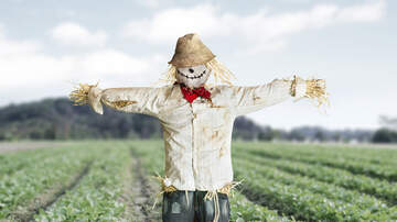 Local News Stories WCH - Scarecrow Festival Weekend in WCH