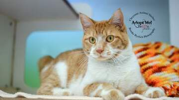 Ally Hart - Cheyenne Animal Shelter Pets of the Week