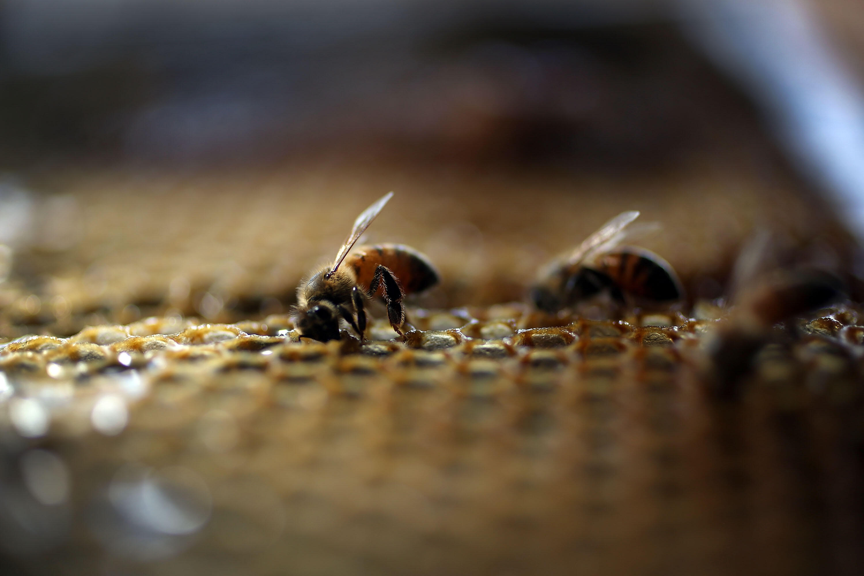 Iowa Lawmakers Considering Bill To Make Honeybee State Insect | WHO Radio News | 1040 WHO