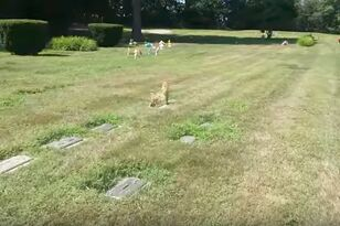Eerie Ghost Dog Illusion Appears At Pet Cemetery And It'll Give You Chills