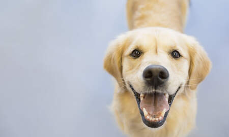 - Thanksgiving Food That May Be Harmful To Your Dog