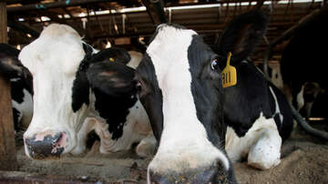 Jack Emerson - A Family Affair: Stepson Spikes Dad's Drink With Cow Tranquilizers