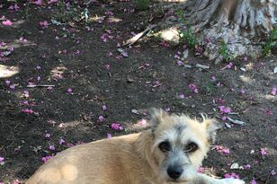 This Buttonwillow dog needs your help!