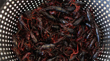 Amanda Flores - Love Crawfish? There's an app for that!
