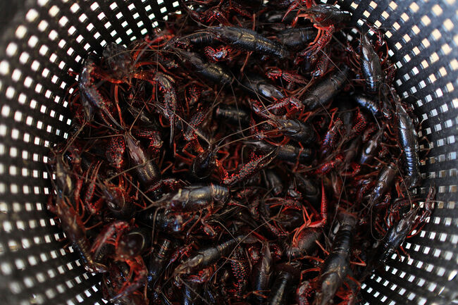 Crawfish Getty Images