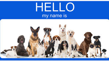 Hannah Mac - The Most Popular Dog Names of 2019