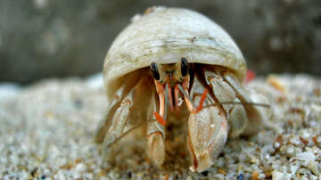 Johnjay And Rich - World's Scariest Hermit Crab Finds The Most Creepy 'Shell' To Live In