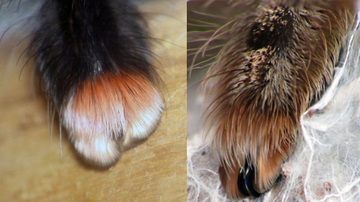 Weird News - These Adorable Paws Aren't From Any Pet You'd Want, And We Are So Confused