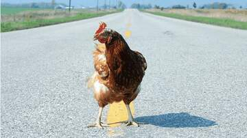 Dave Symonds  - HuH?  Decapitated Chickens found in CT Courtroom