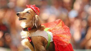 The Afternoon News with Kitty O'Neal - Howl-O-Ween Yappy Hour At Fountainhead Brewing Company
