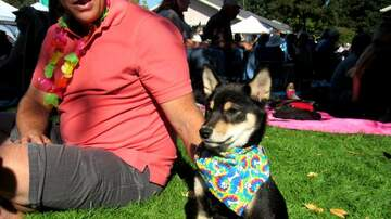 Photos - Woofstock 2017 @ Marin Humane in Novato 10.01.17