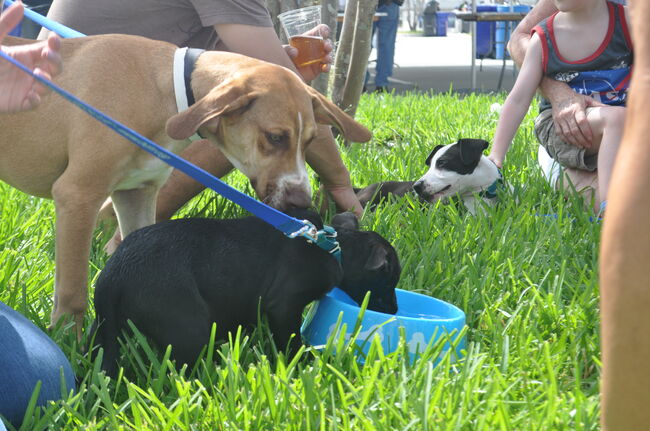 The Puppies Of Brew & Chew