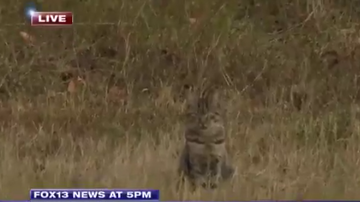 Cyndi - This Cat Photobombed this News Story SO HARD