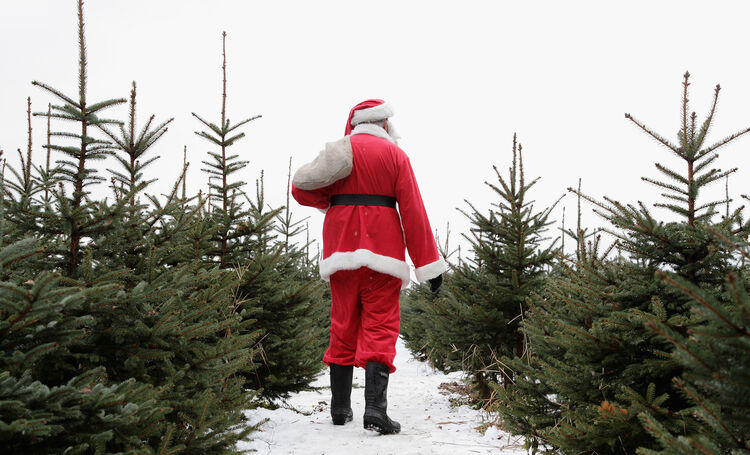 christmas tree prices expected to rise just in time for the holidays - Christmas Tree Prices