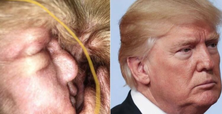 Donald Trump in Dog Ear