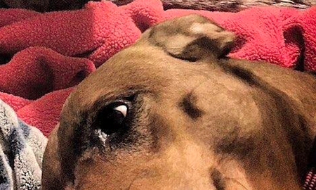 Weird News - Your Brain Will Melt Even Though There's Nothing Wrong With This Dog Photo