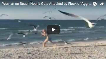 image for Woman attacked by crazed Seagulls!