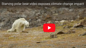 Louie G - Starving Polar Bear exposes Climate Change [VIDEO]