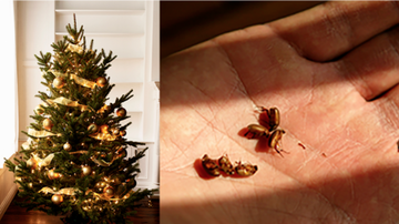 Weird, Odd and Bizarre News - Your Christmas Tree Could Be Infested With Up To 25,000 Bugs