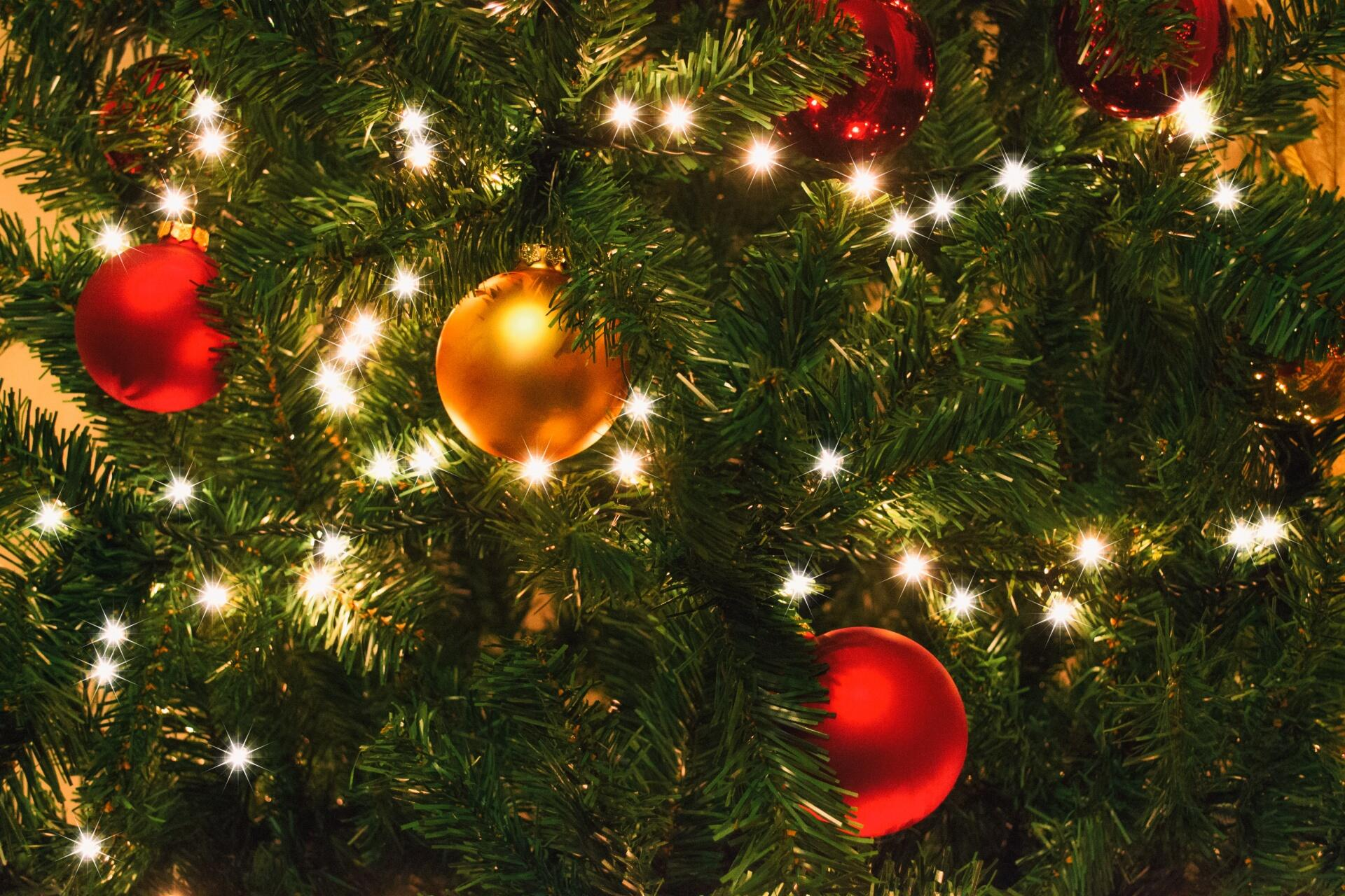 Give Back: Recycle Your Used Christmas Tree Here   NewsRadio WIOD