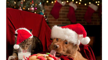 Melissa Sharpe - Are Christmas Trees Safe For Cats And Dogs?