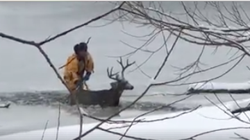 Susie Wargin - Video of West Metro Rescue A Deer In Lakewood