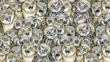 Johnjay And Rich - Only The Biggest Cat Lovers Can Spot The Kitty In This Picture Of Owls