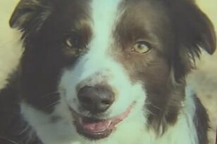 Man With The Flu Saved Dog That Fell Down 50-Foot Deep Hole