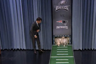 Jimmy Fallon's Puppies Predict Super Bowl LII Winner