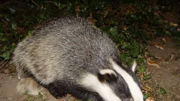 Jim O'Hara - And If A Badger Comes To Your Door...