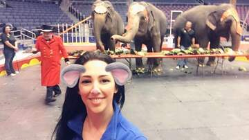 Gina - The Circus is in town!! Gina Visits the Elephants!