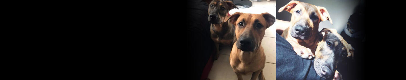 Meet Roscoe & Bandit! Click Here & Learn How You Can Adopt!