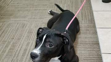 Station Pages - Bugsby - this week's adoptable from the Grand Strand Humane Society