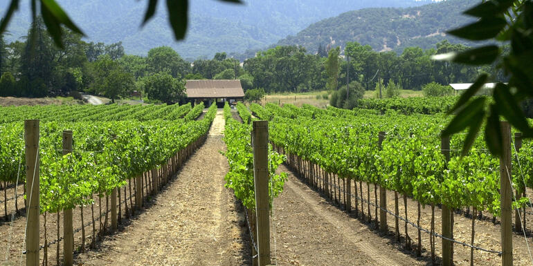 Increasing Share Of California Vineyard Workers Are Women