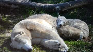 Whats New - 5 Ways You Can Help Polar Bears on National Polar Bear Day