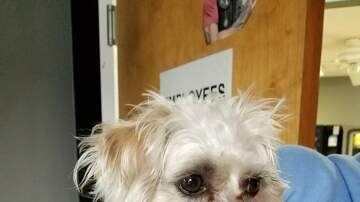 Station Pages - Smalls - this week's adoptable pooch from the Grand Strand Humane Society