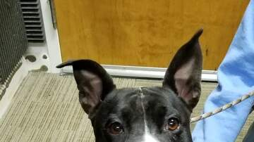 Station Pages - Roxy, this week's adoptable pooch from the Grand Strand Humane Society